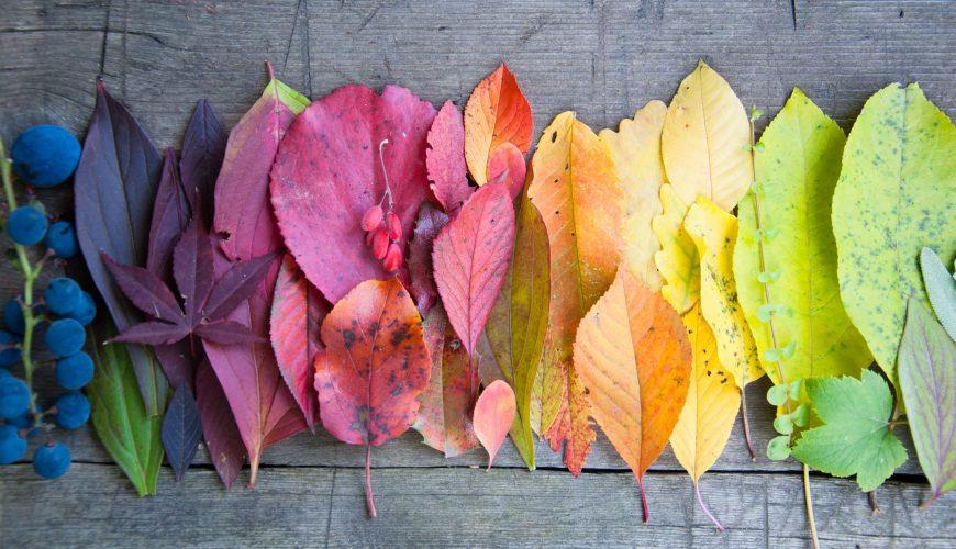 significato colori